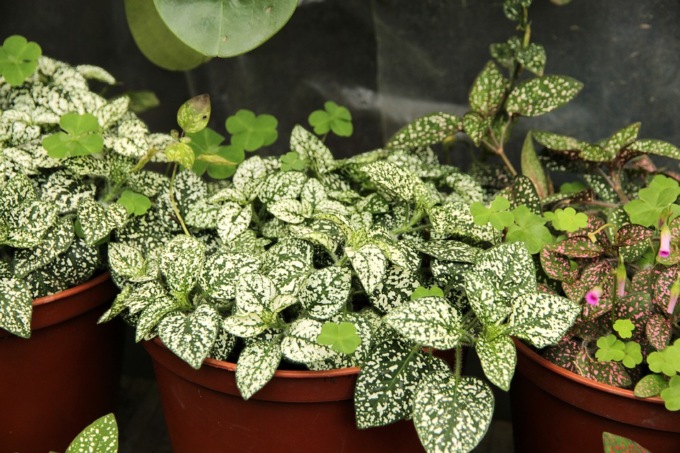 поливати кімнатні рослини