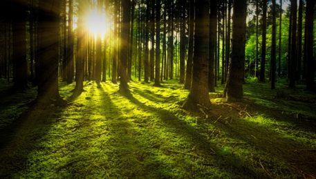 як зберегти ліс підчас будівництва