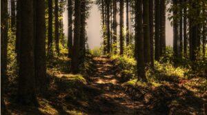 стрес у дерев