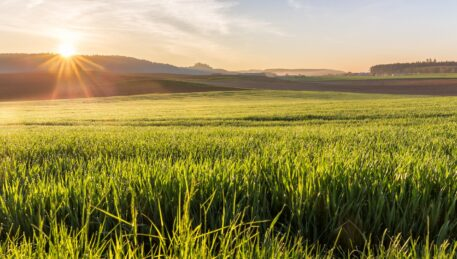 Регенеративное сельское хозяйство