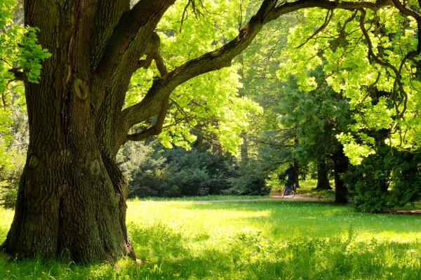 болезни деревьев