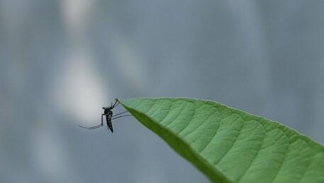 Послуги знищення комарів