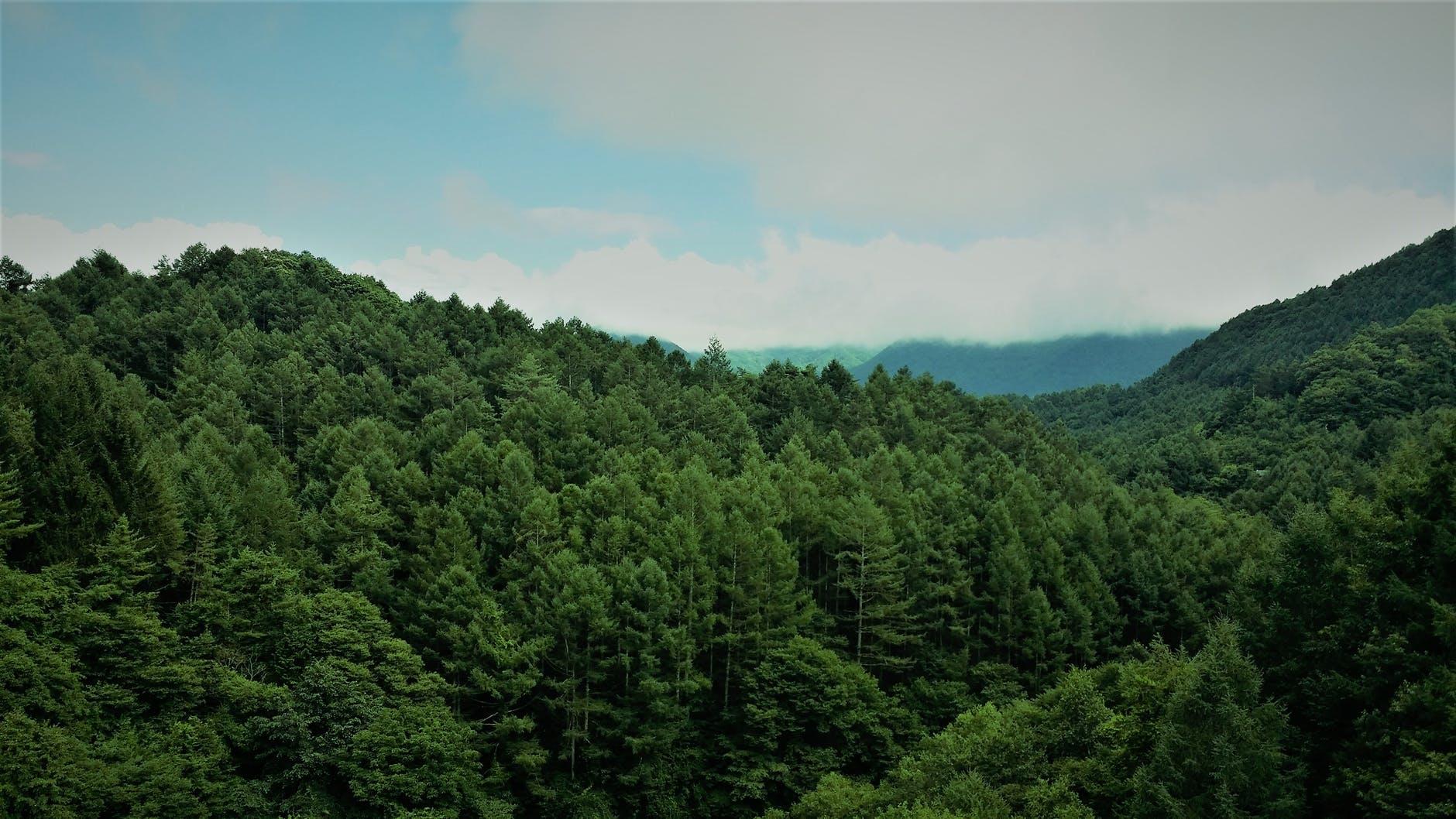 ефективне лікування рослин та лісу, діагностика шкідників і хвороб, екосистемна фітопатологія і лісопатологія