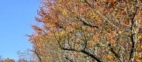 підготовка дерев до зими
